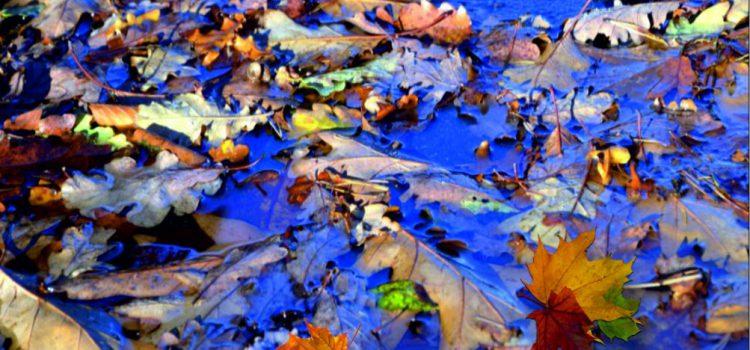 Natte herfstbladeren, glij- en valpartijen.